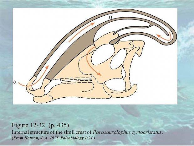 l_174902439ea7ee6parasaurolophus_inte.jpg