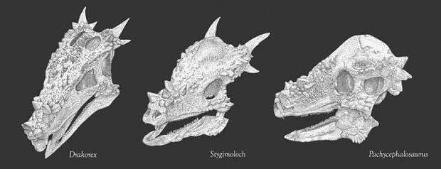 l_174903149881965dracorex_stygimoloch.jpg