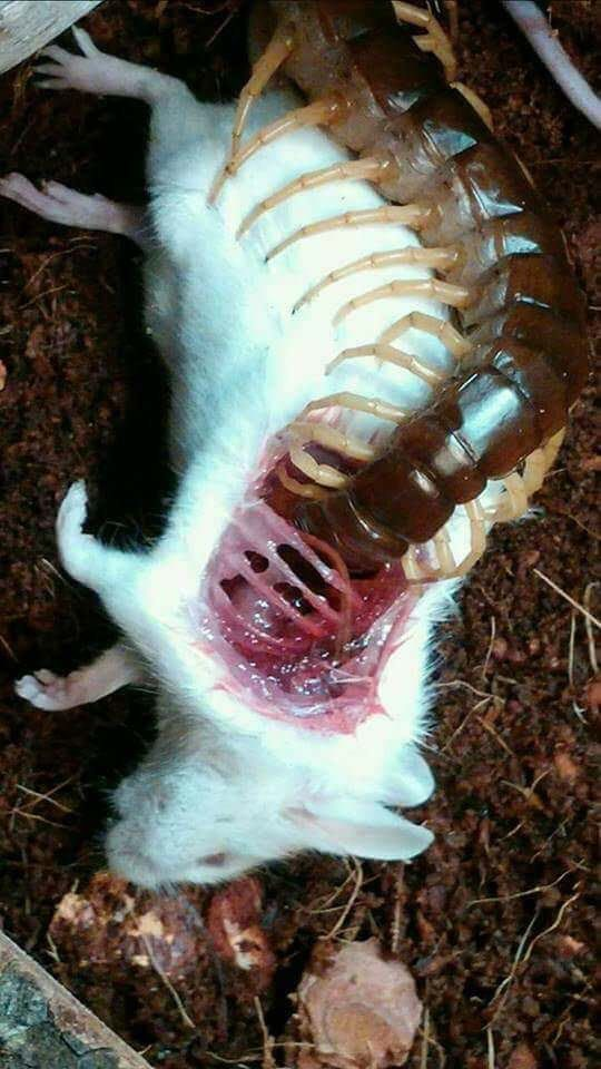 Natura potrafi być przerażająca V - Różnica między atakiem a badawczym ugryzieniem rekina