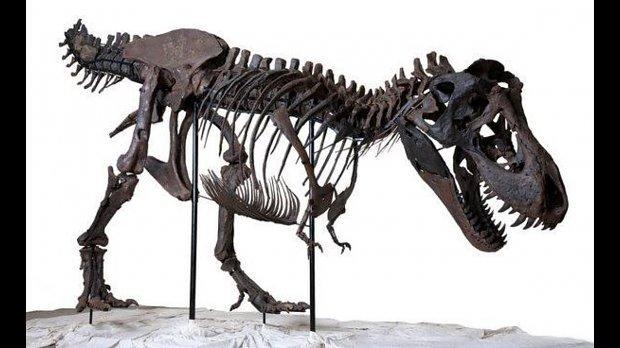 Tyrannosaurus rex - Joe Monster