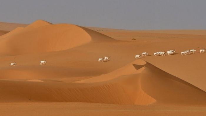 Szybka powtórka z geografii. 54 ciekawostki o – wszystkich – krajach Afryki