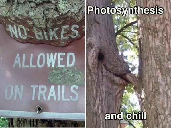 Drzewa, które łykają różne rzeczy