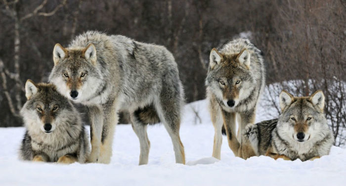 10 rzeczy, które warto wiedzieć o polowaniach – dawniej i dzisiaj