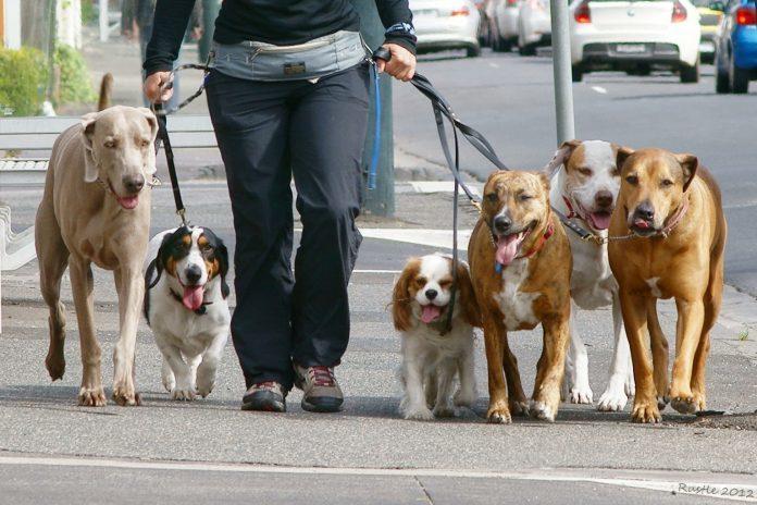 Dogwalker-696x464.jpg