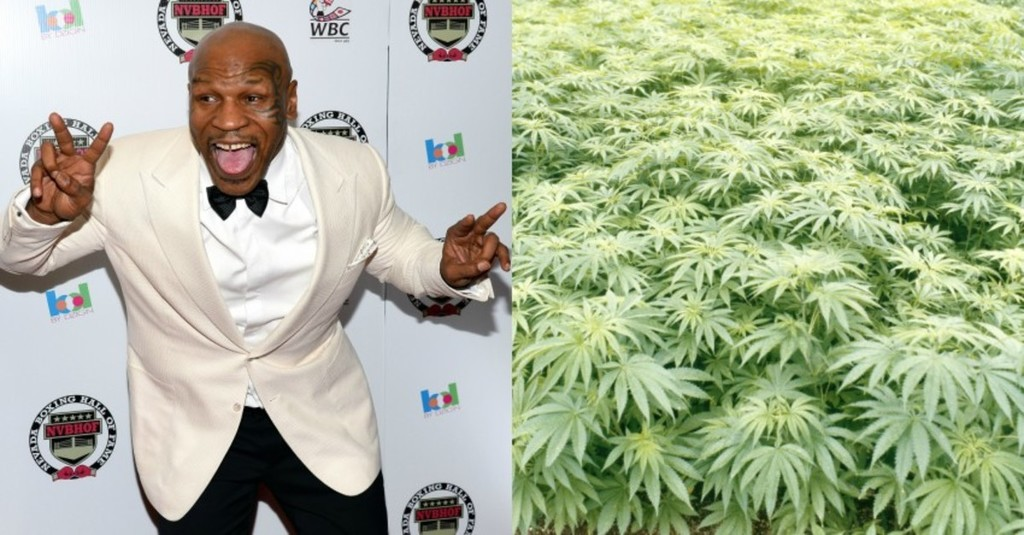 mike-tyson-weed-farm.jpg