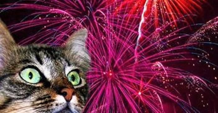 7 najdziwniejszych rzeczy, jakie można zrobić z... kota