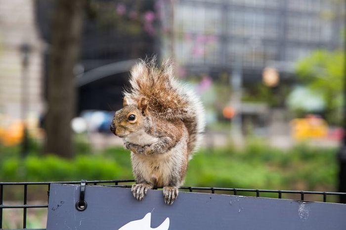Ciekawostki o wiewiórkach - Joe Monster