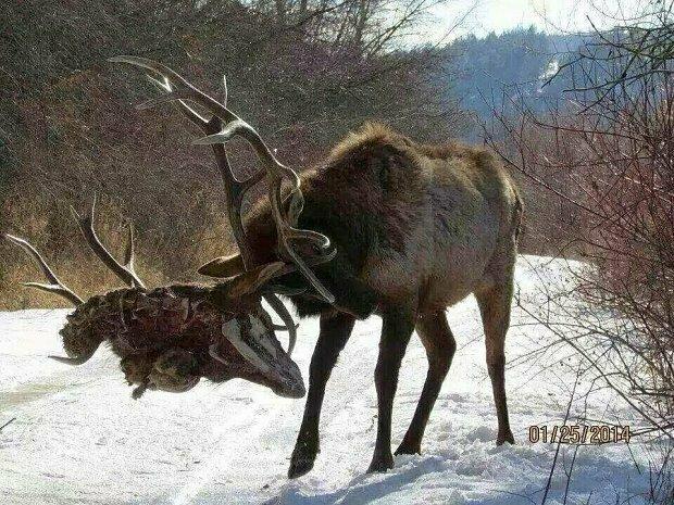 Natura Potrafi Być Przerażająca XI