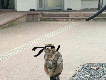 Kot samuraja
