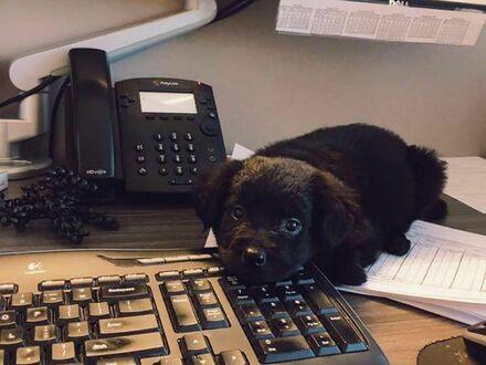 Mamy nowego pracownika w biurze