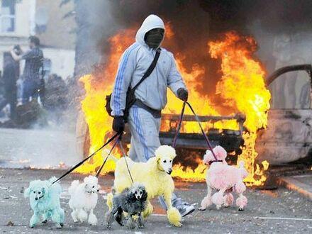 Wyprowadził psy z pożaru