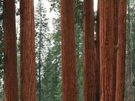 Konkretne drzewa