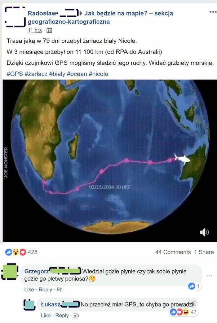 trasa jaką w 79 dni przebył żarłacz biały