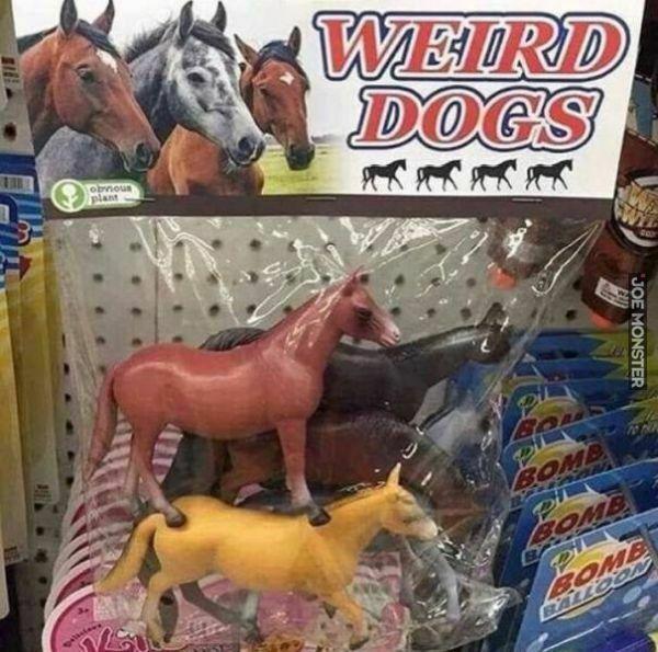 weird dogs