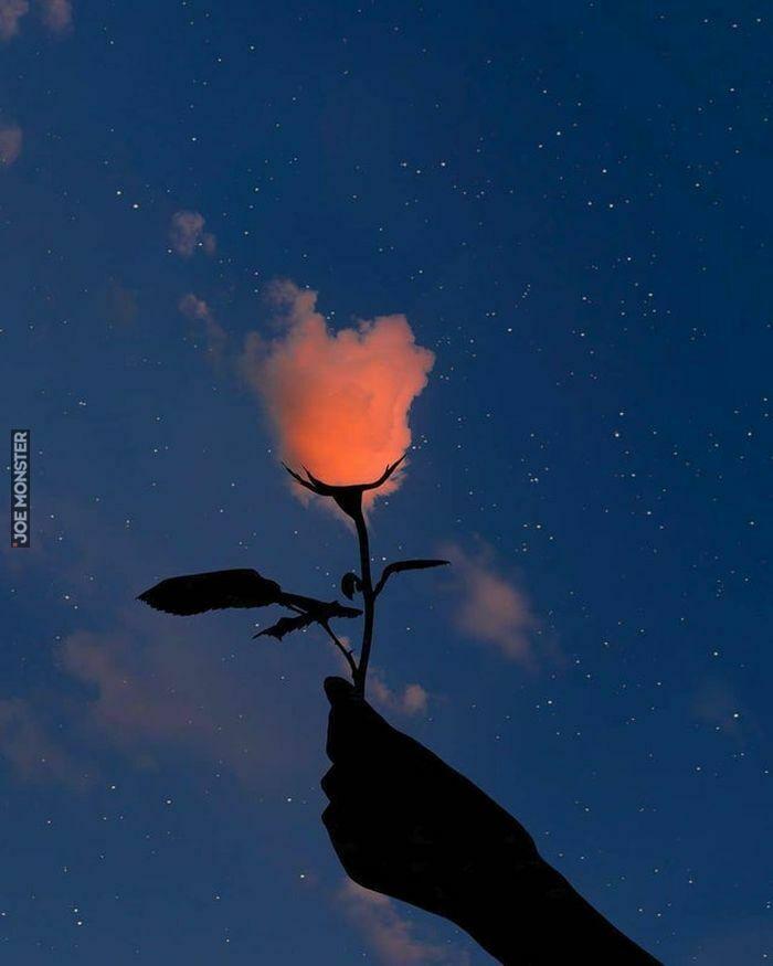 Podniebna róża