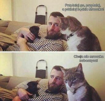 Koty to pamiętliwe bestie