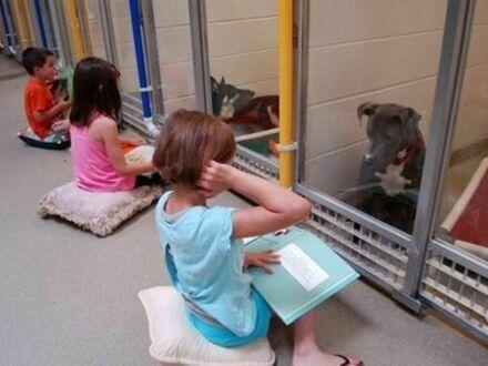 Dzieci ćwiczą czytanie książek w schronisku dla psów