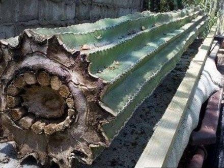 Kaktus wygląda w środku trochę jak kabel
