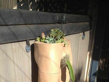 Mamy tu miłośniczki kaktusów?
