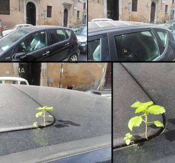 Natura znajduje sposoby