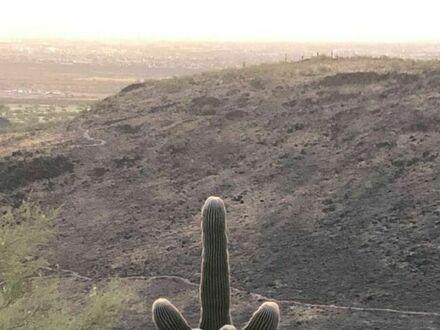 Niegrzeczny kaktusik