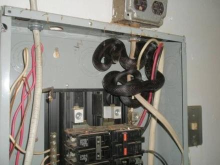 Praca elektryka jest bardziej niebezpieczna, niż myślałem