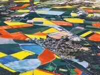 Holandia w sezonie na tulipany