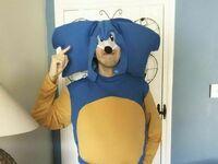 Jeż Sonic jak żywy
