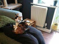 Nasz kot stał się bardzo uciążliwy od kiedy oboje pracujemy w domu, więc musieliśmy improwizować