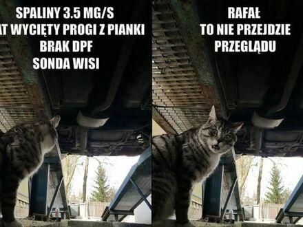 Kot prawdę ci powie