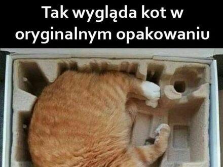 A w skąd braliście koty?