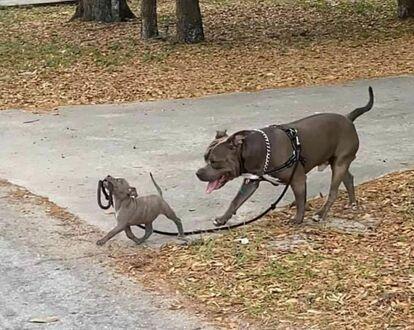 Sami idziemy na spacer