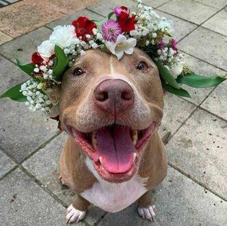 Do twarzy mu w kwiatach