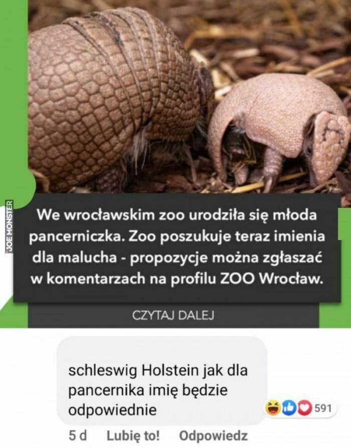 we wrociawskim zoo urodziła się młoda