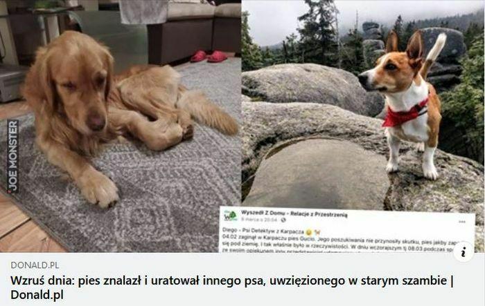 wzruś dnia pies znalazł i uratował innego psa