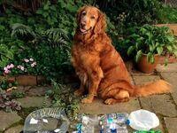 Nauczył się zbierać odpady obserwując pana, zaczął otrzymywać za to przysmaki i tak wysprzątał całą okolicę