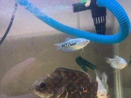 Markowa rybka