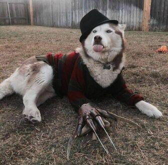 Niesforny Freddy