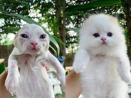 Jak dwa zupełnie różne zwierzaki