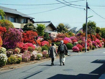 Poranny spacer w pełnej uroku dzielnicy