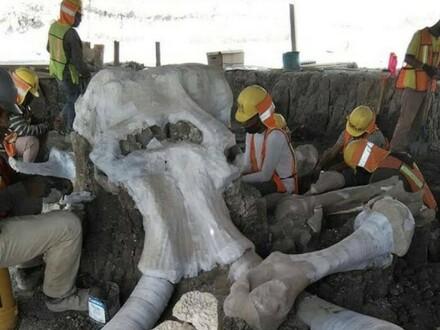 Na terenie lotniska Santa Lucia w Meksyku odkryto szczątki ponad 60 mamutów