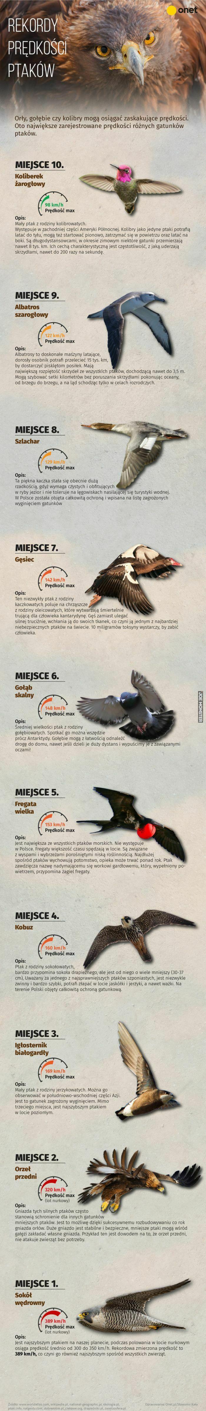 rekordy prędkości ptaków