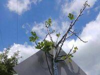 Drzewko rosnące w słupku znaku drogowego