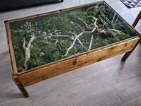 Terrarium w stoliku na kawę