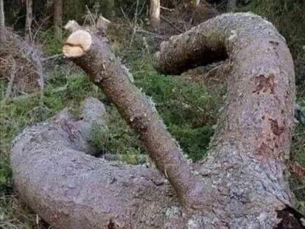 Idź do lasu, mówili