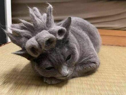 Ma ciekawą fryzurę