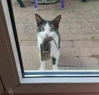 Zobacz, złapałem mysz