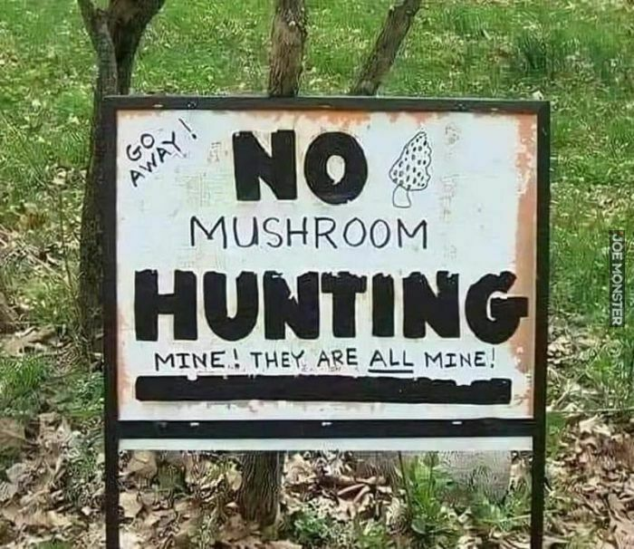 no mushroom hunting mine they are all