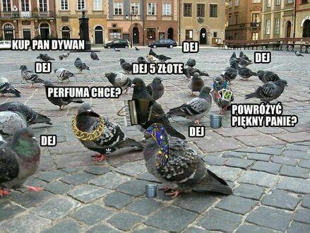 Cygańskie gołębie