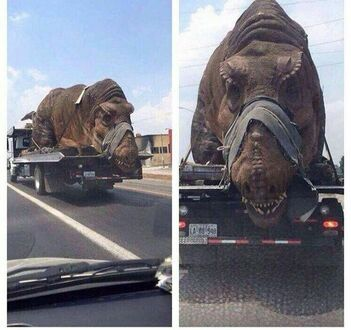 Nieludzkie obchodzenie się z dinozaurami musi się skończyć